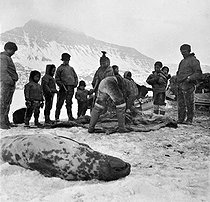 Inuits butchering a seal. Greenland (Denmark), around 1900. © Léon et Lévy / Roger-Viollet