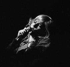 Sylvie Vartan. Paris, Olympia, septembre 1970. © Patrick Ullmann/Roger-Viollet