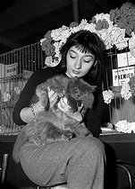 Juliette Gréco in the Club of friends of cats, in November, 1949. © Roger-Viollet
