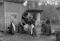 Farmers about to kill a pig. France, circa 1900. © Jacques Boyer/Roger-Viollet