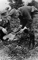 World War II. Front of Normandy, July 1944. German soldiers examining a fragment of allied bomber on which the number of missions is writen with bombs. © LAPI/Roger-Viollet