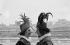 """""""Cyrano de Bergerac"""" , play by Edmond Rostand. Paul-Emile Deiber and Jacques Destoop. Paris, Comédie-Française, July 1972. © Angelo Melilli/Roger-Viollet"""