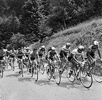 1964 Tour de France. From the left to the right: T. Simpson, J. de Roo, J. Anquetil, J. Jimenez and Raymond Poulidor. © Roger-Viollet