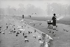 Round Pond, ornamental lake in Kensington Gardens. London (England), 1958. © Jean Mounicq/Roger-Viollet