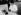 Prélèvement du venin pur de scorpion au moyen d'un appareil électrique. Institut Pasteur d'Alger. Juillet 1947. © Jacques Boyer/Roger-Viollet