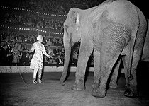 Gala de l'Union des Artistes, charity circus performed by artists. Arletty (1898-1992), French actress, as an elephant trainer. Paris, on March 1st, 1953. © Roger-Viollet