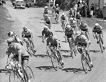 Tour de France 1964. A droite, Jacques Anquetil. © Roger-Viollet