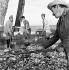 Cuba. A bord d'un chalutier, 1960.     GLA-094J-02 © Gilberto Ante/Roger-Viollet