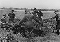 World War II. Front of Normandy. German soldiers camouflaging a gun, July 1944. © LAPI/Roger-Viollet