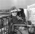 Colette (1873-1954), écrivain français. Deauville (Calvados), juillet 1952. © Roger-Viollet