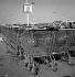 La consommation © Roger-Viollet