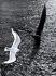 Composition. Mouette survolant un voilier, 1950-1960. © Douchan Stanimirovitch/Alinari/Roger-Viollet