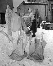 Housewife taking down the clothes, frozen by cold. Bristol (England), February 2nd, 1954.    © TopFoto/Roger-Viollet