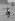 Prince Philip (né en 1921), duc d'Edimbourg, le bras bandé à son retour d'entraînement avant de jouer pour Windsor Park contre l'équipe brésilienne de Sao Silvestre. Midhurst (Angleterre), Cowdray Park, 21 juillet 1963. © PA Archive/Roger-Viollet