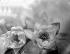 Fleurs de nénuphar. © Laure Albin Guillot / Roger-Viollet
