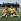 Jacques Anquetil et Eddy Merckx, coureurs cyclistes. © Roger-Viollet