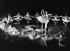 Margot Fonteyn (1919-1991), danseuse britannique, et Rudolf Noureev (1938-1993), danseur russe. Berlin, théâtre de l'ouest, novembre 1965. © Ullstein Bild / Roger-Viollet