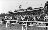 L'arrivée du Grand Prix à l'hippodrome de Deauville (Calvados), vers 1930. © CAP / Roger-Viollet