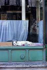 Chien dans une vitrine rue Piat. Paris (XXème arr.), mai 1967. Photographie de Léon Claude Vénézia. (1941-2013). © Léon Claude Vénézia/Roger-Viollet