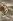 Guerre 1914-1918. Carte de Bonne Année 1916. © Roger-Viollet