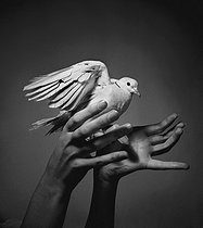 Turtledove in hands. © Pierre Jahan / Roger-Viollet