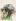 """Raoul Dufy (1877-1953). """"Les roses"""". Aquarelle et gouache sur papier vélin d''Arches, vers 1942. Paris, musée d''Art moderne. © Musée d'Art Moderne/Roger-Viollet"""