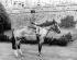 Le prince Charles monté sur Greensleeves, son poney gallois, 1957.  © TopFoto/Roger-Viollet