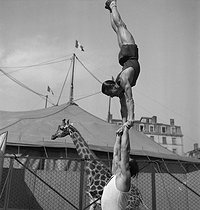 The Clérans, trapeze artists. France, 1950's. © Gaston Paris / Roger-Viollet