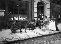 Goatherd selling the milk of his goats. Paris, 1911. © Jacques Boyer/Roger-Viollet