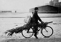 Man carrying a Christmas tree on his bicycle, circa 1900-1910. © Roger-Viollet