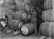Wine growers. Wine decanting in the Bordeaux region. Château Haut-Brion (France), 1931. Photograph by François Kollar (1904-1979). Paris, Bibliothèque Forney. © François Kollar / Bibliothèque Forney / Roger-Viollet