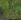 """Claude Monet (1840-1926). """"Le bassin aux Nymphéas. Harmonie verte"""". Huile sur toile, 1899. Paris, musée d'Orsay. © Imagno / Roger-Viollet"""
