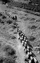 Sheep flock in Santa Magdalena (Spain), in 1956. © Roger-Viollet