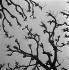 Trees during Winter. © Gaston Paris / Roger-Viollet