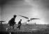 """Les """"Faucheurs de marguerites"""", pionniers de l'aviation © Maurice-Louis Branger/Roger-Viollet"""