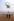 """Lebanese Civil War. """"Sea Stallion"""" helicopter of the US Marines. Beirut (Lebanon), 1983. © Françoise Demulder / Roger-Viollet"""