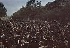 World War II. Crowd celebrating the Liberation of Paris on the Champs-Elysées, 1944. Photograph by André Zucca (1897-1973). Bibliothèque historique de la Ville de Paris. © André Zucca / BHVP / Roger-Viollet