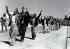 Conflit israélo-arabe (1948-1949). Palestiniens se rendant à l'armée israélienne, 3 octobre 1948. © Ullstein Bild / Roger-Viollet