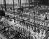 Les Halles. Pavillon de la viande. Paris (1er arr.). 1948-1949. Photographie de René Giton dit René-Jacques (1908-2003). Bibliothèque historique de la Ville de Paris.  © René-Jacques/BHVP/Roger-Viollet