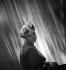 Bibi de paille Rose Valois, garni de fleurs artificielles et de rubans. Paris, avril 1937. © Boris Lipnitzki/Roger-Viollet