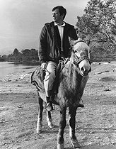 Jean-Paul Belmondo (born in 1933), French actor, on a Tibetan pony. © Roger-Viollet