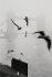 Gulls over the River Thames. Tower Bridge. London (England), 1958. © Jean Mounicq/Roger-Viollet