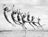 Groupe de danseuses entraînées par Lillian Newman, répétant sur une plage. Long Beach (Californie, Etats-Unis), 16 mars 1934. © Underwood Archives/The Image Works/Roger-Viollet