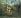 """Henri Rousseau (dit le Douanier, 1844-1910). """"Dans la forêt tropicale. Lutte entre tigre et taureau"""". Huile sur toile, 1908-1909. Saint-Pétersbourg (Russie), musée de l'Ermitage. © Iberfoto / Roger-Viollet"""