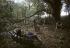 Festival de Woodstock. Groupe de participants dans les bois. Bethel (Etats-Unis), 17 août 1969.  © Tom Miner / The Image Works / Roger-Viollet