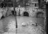 Crue de la Seine. La fosse aux ours du Jardin des Plantes. 1910. © Maurice-Louis Branger/Roger-Viollet