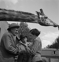 Cirque. Girafe. France, vers 1940. © Gaston Paris / Roger-Viollet