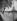 La Tour Eiffel depuis depuis les quais de la Seine. Paris (VIIème arr.).  Photographie de René Giton dit René-Jacques (1908-2003). Bibliothèque historique de la Ville de Paris.  © René-Jacques / BHVP / Roger-Viollet