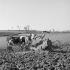 Ferme. Bretagne. Années 1950. Photographie de Janine Niepce (1921-2007). © Janine Niepce/Roger-Viollet