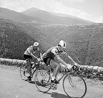 Raymond Poulidor and Jacques Anquetil (on the left), French racing cyclists. 1964 Tour de France. © Roger-Viollet